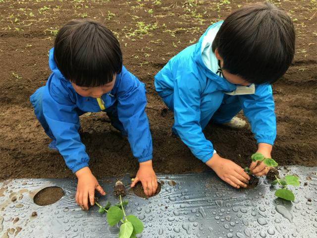 「イモ掘り・豆植え&ホタル観賞」報告(Green Gift地球元気プログラム)